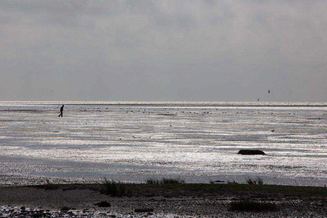Een wandelaar op het glinsterende wad bij eb.